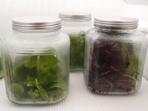 gewaschene salatblaetter in gläsern