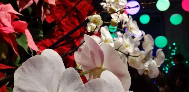 bepflanzte wand mit orchideen