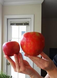 riesiger apfel im vergleich zu normal grossem