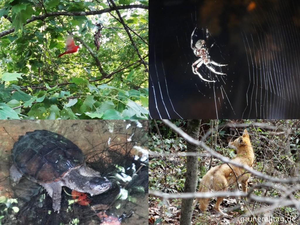Ein kleines bisschen Wildnis: Tiere vor unserem Balkon in Atlanta