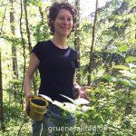 Blaubeeren pflücken im Wald